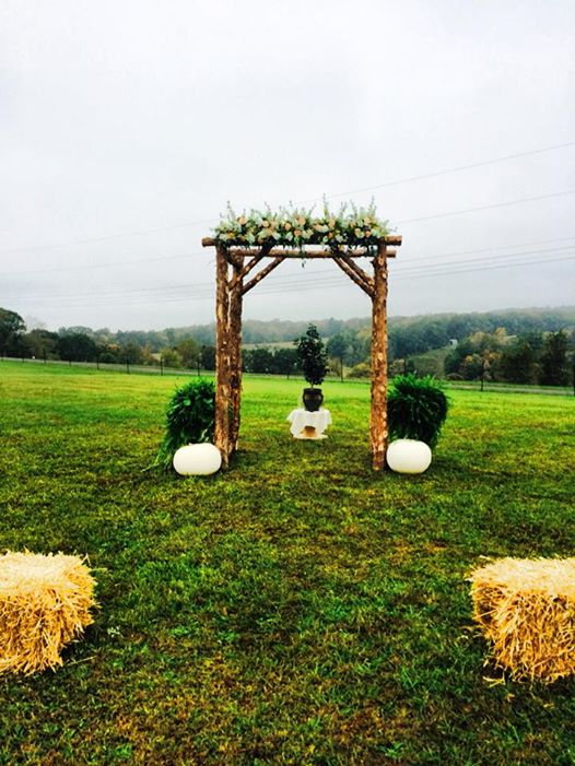 branching out hoyal wedding arch